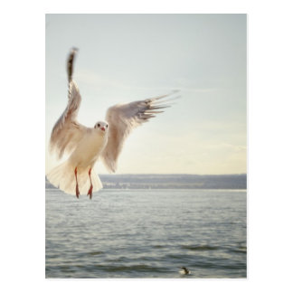 Flying Gull Postcard