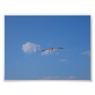 Flying Gull Poster