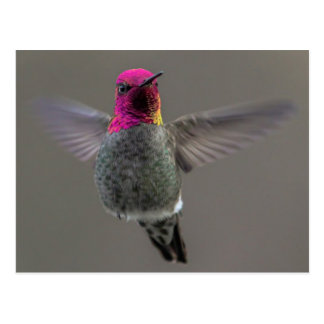 Flying Hummingbird Postcard