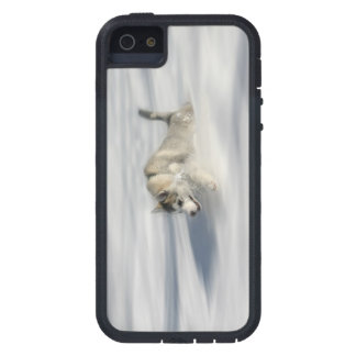 Flying in a Huskys Dream - iPhone 5 Case