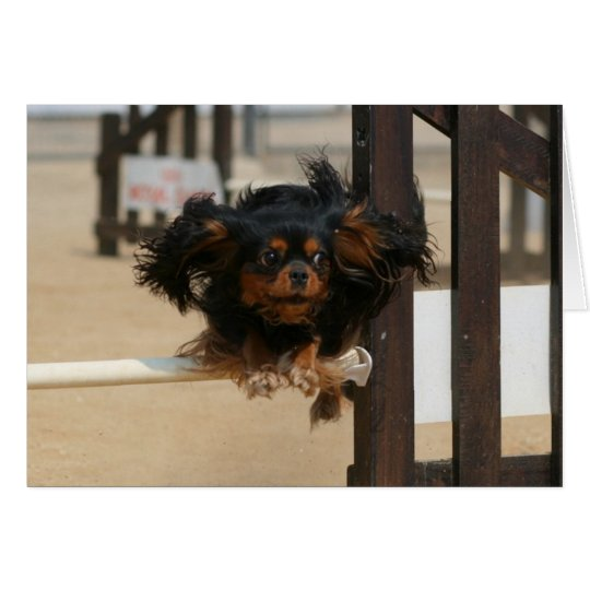 Flying Maia black & Tan Cavalier King Charles Card
