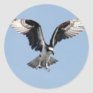 Flying Osprey Classic Round Sticker