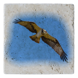 Flying osprey with a target in sight trivet