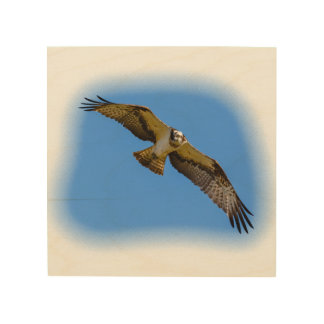 Flying osprey with a target in sight wood wall decor