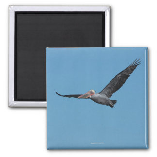 Flying Pelican Magnet 10
