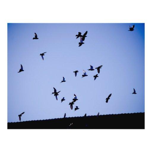 Flying pigeons flyer design