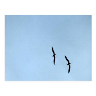 Flying Sea gulls Postcard