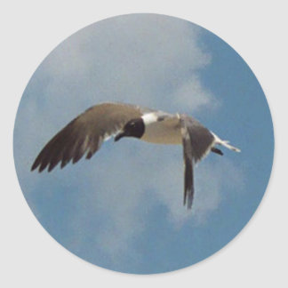 Flying Seagull Stickers