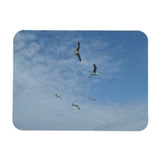 "Flying Seagulls 3""x4"" Magnet"