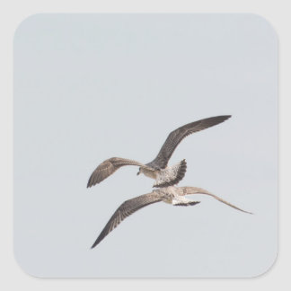 Flying seagulls square sticker