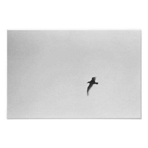 Flying Solo Photo Art