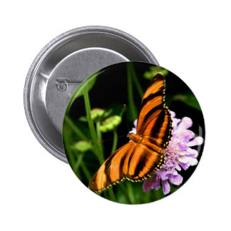 Flying Tiger Butterfly Pinback Buttons