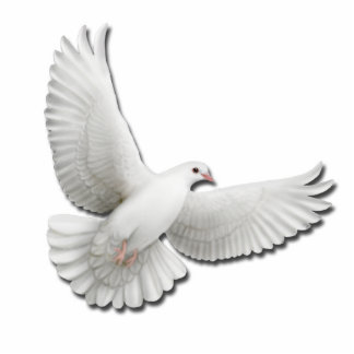 Flying White Dove Pin Photo Sculpture Button