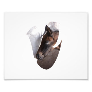 foal and mother dove shape photo