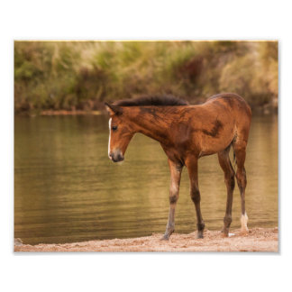 Foal at the river photo print