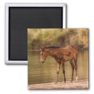 Foal at the river square magnet