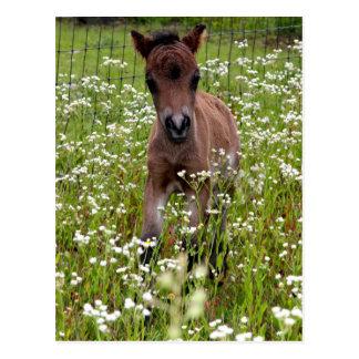 Foal in field postcard