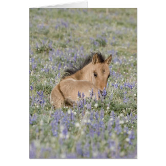 Foal in Lupine Wild Horse Greeting Card