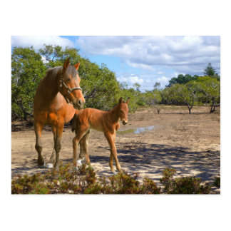 Foal learns balance postcard