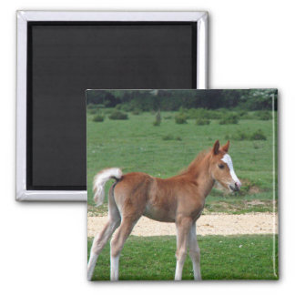 Foal Magnets