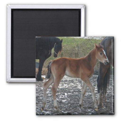 Foal magnet