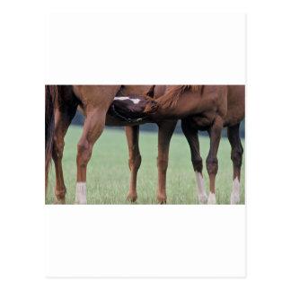 Foal Nursery Postcard