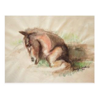 Foal Relaxing Postcard