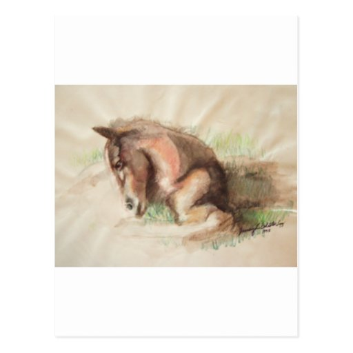 Foal Relaxing Postcards