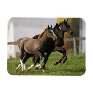 Foal Running Rectangular Photo Magnet