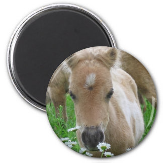 Foal Smelling Daisies Round Button Fridge Magnets