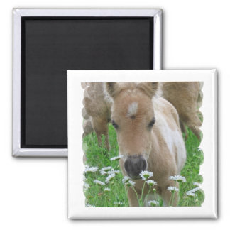 Foal Smelling Daisies Square Magnet