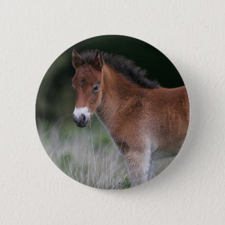 Foal Standing 2 Inch Round Button
