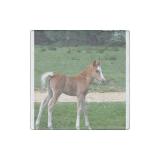 Foal Stone Magnets