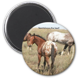 foals 2 inch round magnet