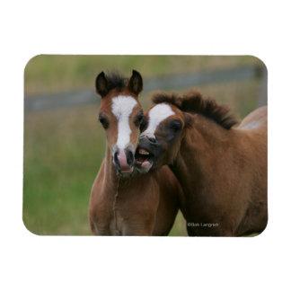 Foals Playing Rectangular Photo Magnet