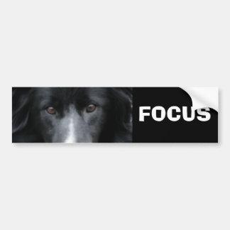 Focus Border Collie Motivational Bumper Sticker Car Bumper Sticker