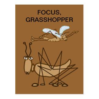 FOCUS GRASSHOPPER POSTCARD