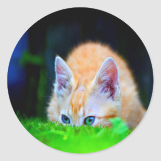 focus on opportunity and success cat round sticker