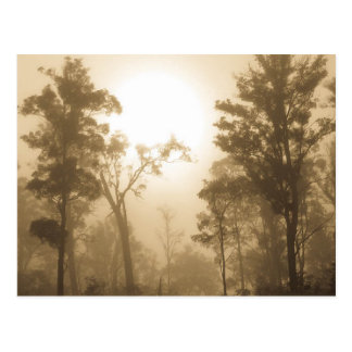 Foggy Forest Sepia - Postcard