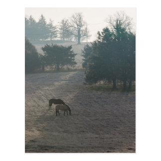 Foggy Grazing Postcard