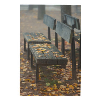 Foggy morning park bench, Germany Wood Print