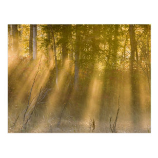 Foggy Sunrise at  Tamarac NWR near Detroit Lakes Postcard