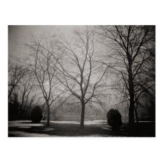 Foggy Winter Melting Snow Art Postcard