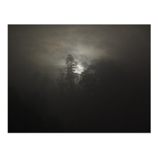 Foggy woods postcard