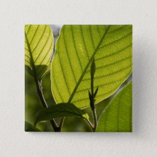 Foliage 2 Inch Square Button