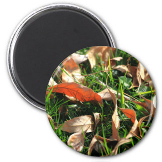 Foliage and Grass Magnets