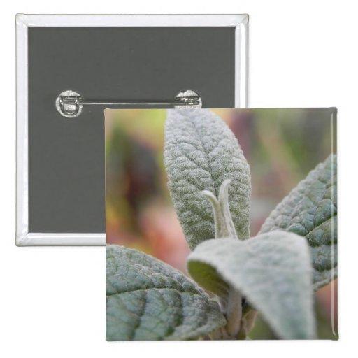 Foliage - Butterfly Bush Buttons