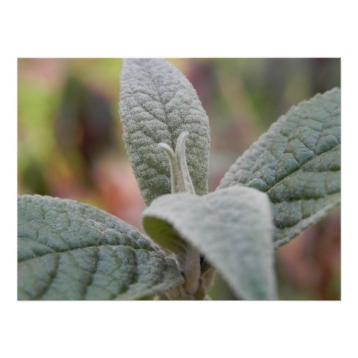 Foliage - Butterfly Bush Poster