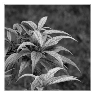 Foliage in black years white 02 poster
