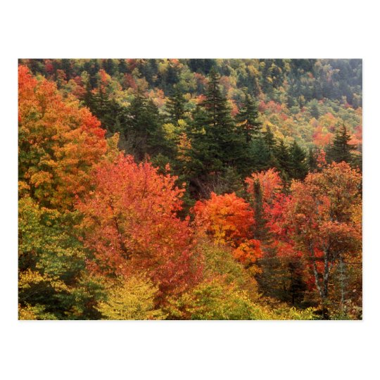 Foliage in the White Mountains Postcard